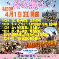 4月1日日曜日は「春はきりしま 桜のつどい」を開催!