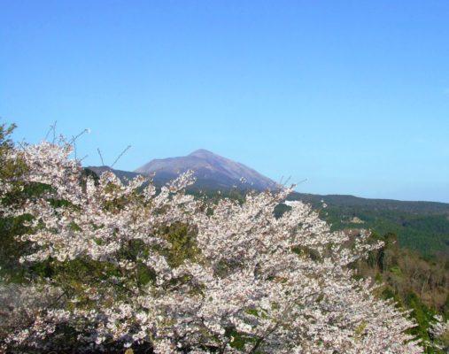 高千穂と桜